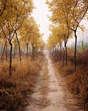 China, Beijing, TLUS, Assignment, Feature, Art Story, Andrew Rowat, Rowat, 1star,