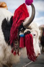 1578261655899_Web_Tibet_005