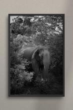 1608035241217_Detalle_Sri_Elefante