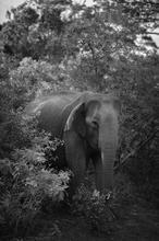 1608035264387_Low_Sri_Elefante