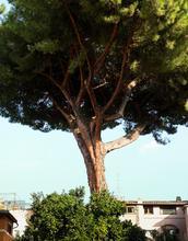 1589946522871_LGarcia_Italia2018_0419