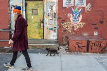 City, New York, Street Art, dog
