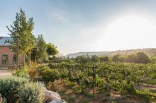 1557155797497_winespectator_israel_2