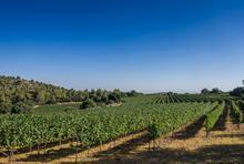 1557155797519_winespectator_israel_5