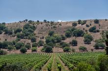 1557155797549_winespectator_israel_10