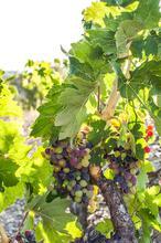 1557157059755_Prioratl-Wine-Spectator-1