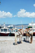 Greece, Hydra, Island, Donkeys