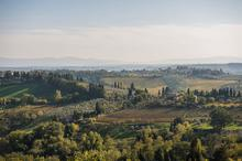 Italy, Tuscany, Vineyards, Country, View